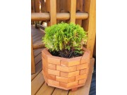 Small octagonal flower pot